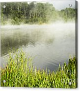 Misty Summer Morning  Acrylic Print