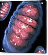 Mitochondria Acrylic Print