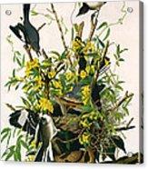 Mocking Birds And Rattlesnake Acrylic Print
