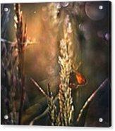Moher 3 Acrylic Print