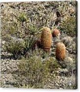 Mojave Desert Cactus Acrylic Print