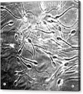 Monkey Sperm Acrylic Print