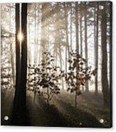 Morning Dream Acrylic Print