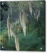 Moss Hanging Over The River Acrylic Print