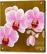 Moth Orchid Acrylic Print