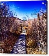 Mountain Creek Path-sundance Utah Acrylic Print