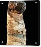 Mummified Dog From Ancient Egypt Acrylic Print