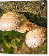 Mushroom On Tree Trunk Acrylic Print