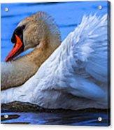 Mute Swan 2 Acrylic Print