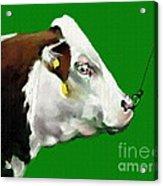 My Favorite Bull Acrylic Print