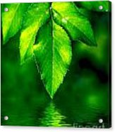 Natural Leaves Background Acrylic Print