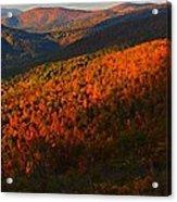 Nature's Color Palette Acrylic Print by Candice Trimble