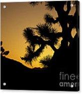 New Photographic Art Print For Sale Joshua Tree At Sunset Acrylic Print