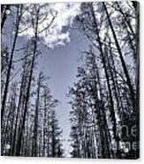 North Woods Forest Acrylic Print