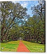 Oak Alley 3 Acrylic Print