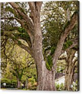 Oak Alley Backyard Acrylic Print