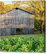 Old Tobacco Barn Acrylic Print