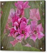 Oleander Cluster Acrylic Print