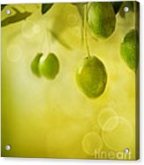 Olives Design Background Acrylic Print by Mythja  Photography