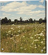 On The Summer Meadow. Russia Acrylic Print