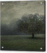 One Tree Acrylic Print