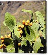 Opuntia Ficus-indica Acrylic Print