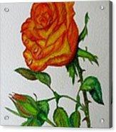 Orange Rose Acrylic Print