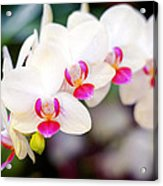 Orchid Beauty Acrylic Print by Tammy Smith