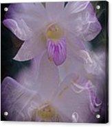 Orchid Ruffles Acrylic Print