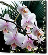 Orchid Series 7 Acrylic Print