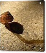 Oregon Snail Acrylic Print