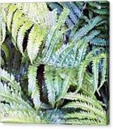 Ostrich Fern Acrylic Print