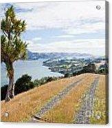 Otago Peninsula Coastal Landscape Dunedin Nz Acrylic Print