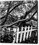 Overflowing A Picket Fence Acrylic Print