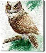 Owl Study Acrylic Print