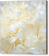 Pale Peony Petals Acrylic Print