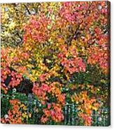 Pallette Of Fall Colors Acrylic Print