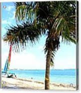 Palm Tree And Sailboat Acrylic Print