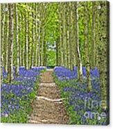Path Through Bluebells Resembling Water Colour Acrylic Print
