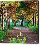 Pathway Through Colorful Forest In Fall Autumn Acrylic Print