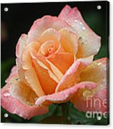 Peaches And Cream Acrylic Print
