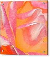 Peachy Pink Rose Acrylic Print