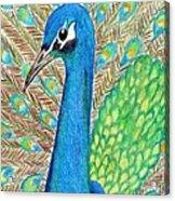 Peacock Acrylic Print by Carol Hamby