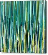 Peacock Spikes Acrylic Print