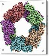 Peroxiredoxin 4 Antioxidant Enzyme Acrylic Print