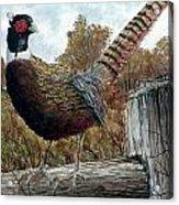 Pheasant On Fence Acrylic Print