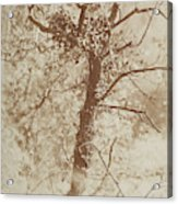 Photograph Of A Tree Acrylic Print