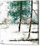Pine Woods Acrylic Print