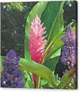 Pink Ginger Acrylic Print