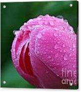 Pink Rain Drops Acrylic Print
